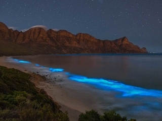 Bioluminescent phytoplankton (noctiluca scintillans) lighting up the night-time surf at the Kogelberg Biosphere Reserve near Cape Town.