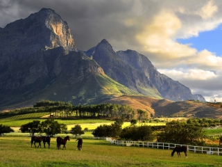 Fairy-Tale racehorse nursery land in the Cape