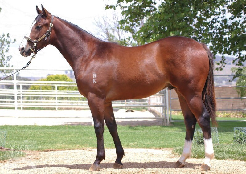 For sale : SA champ VIA AFRICA's yearling colt by Redoute's Choice (AUS)