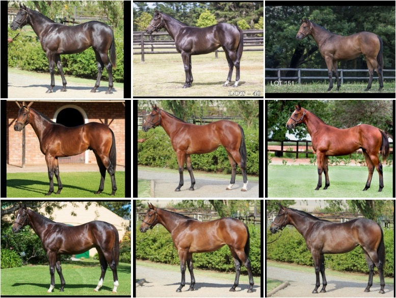 2019 Cape Premier Yearling Sale