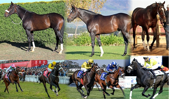 DO IT AGAIN in pics : from foal to dual GR1