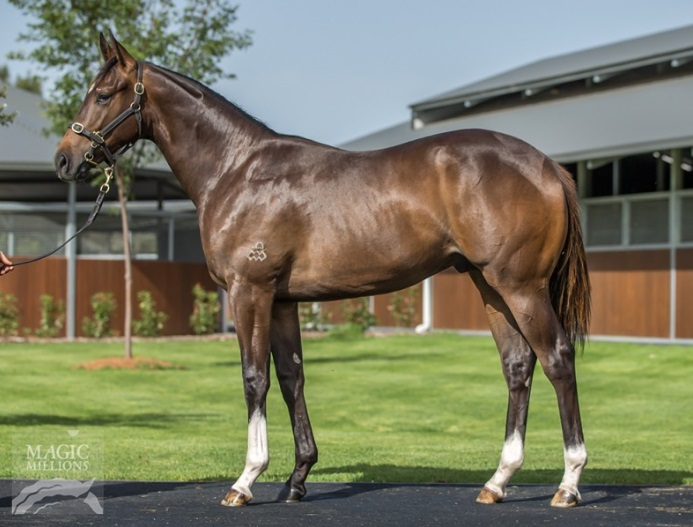 SA flier National Colour's yearling colt on the 2019 GCYS