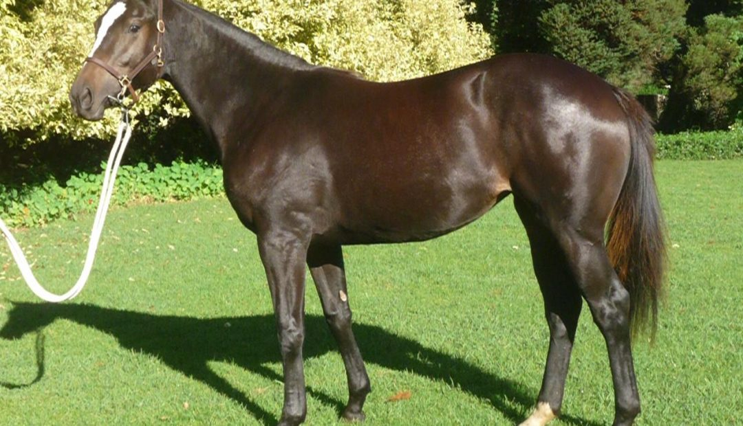 PRIVATE SALE : yearling filly