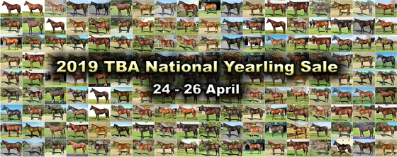Updated : 2019 TBA National yearling sale gallery of lots